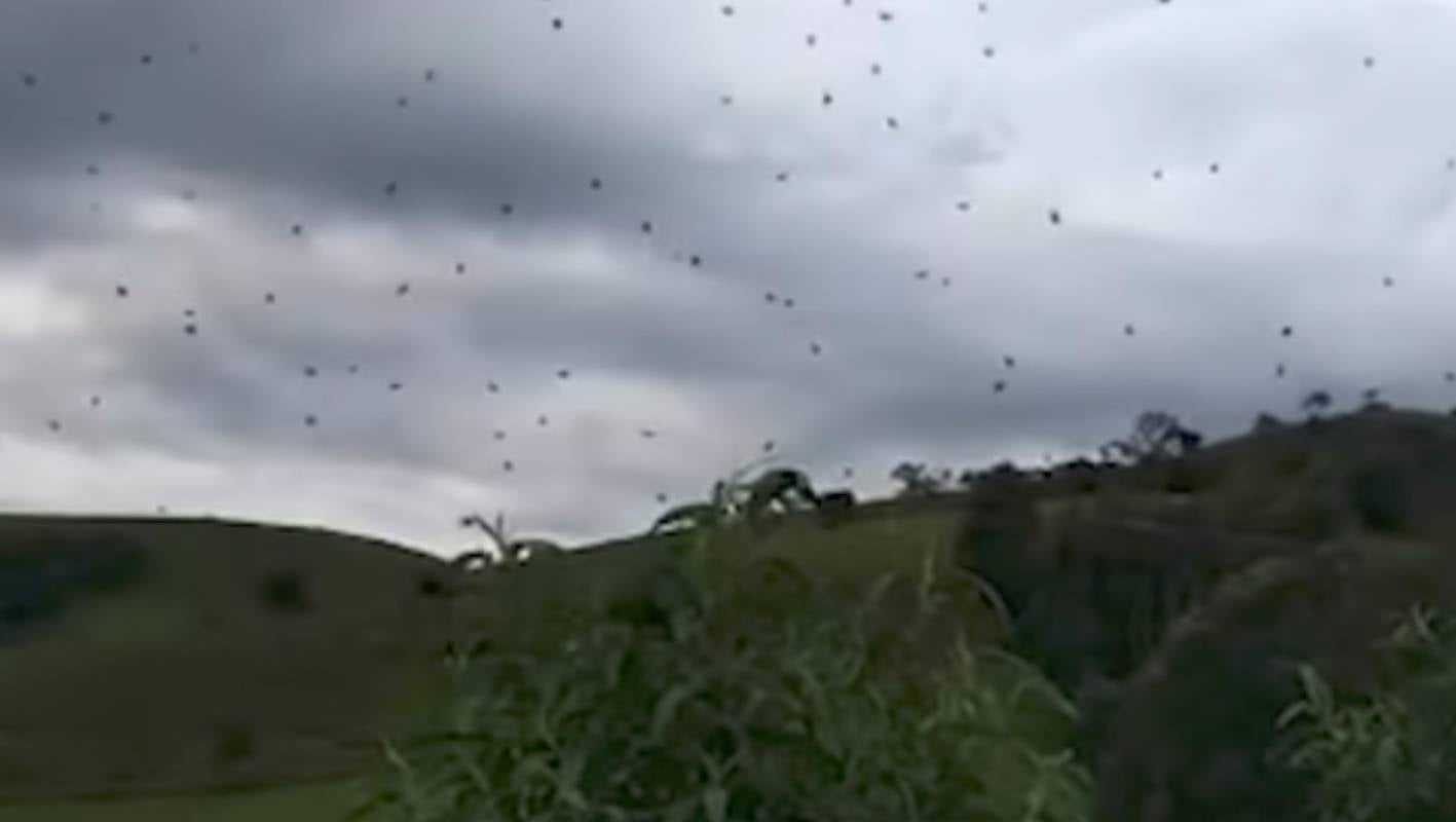 'Raining spiders': Airborne arachnids appear over south-eastern Brazil