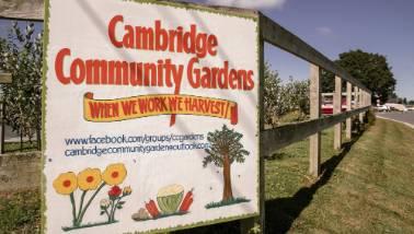 Pesky pūkeko threaten Cambridge community gardens | Stuff co nz