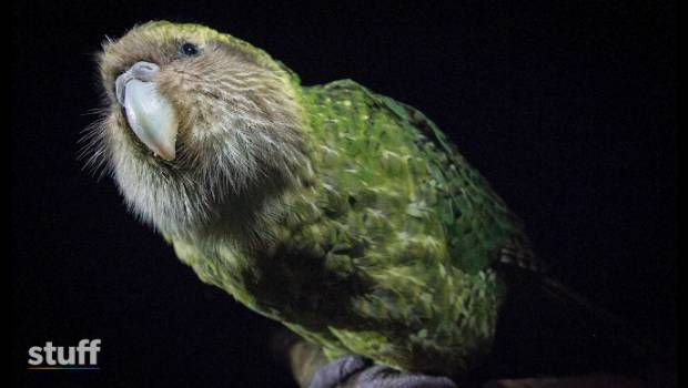 Digital species: Unravelling the mysteries of kākāpō through