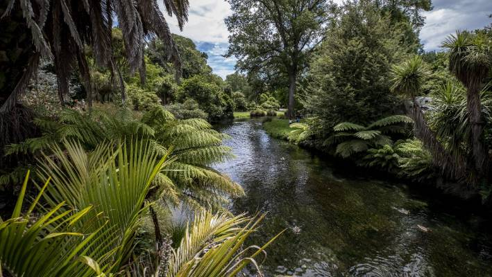 Avon River, Christchurch Botanic Gardens,