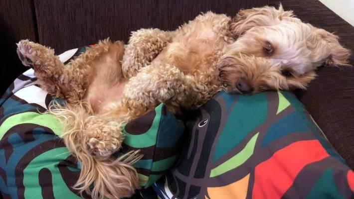 Furry Friday: A heat wave of pet cuteness | Stuff co nz