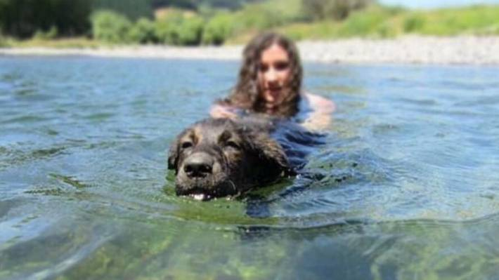 Swimmers and dogs should keep away from sections of the Hutt River.