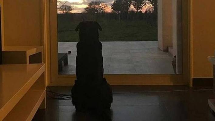 The dog Emiliano Sala Nala is still waiting patiently for her & her; football player to come home
