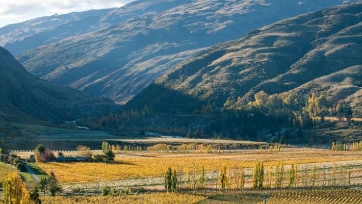 New Zealand's a great place to invest in a vineyard, if you