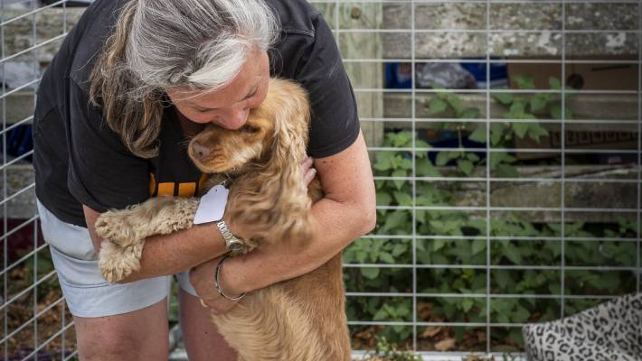 HUHA volunteer Vikki Ambrose gives Molly, the dog, a comforting snuggle at the Richmond Showground which has been transformed into an animal evacuation hub, near Nelson.