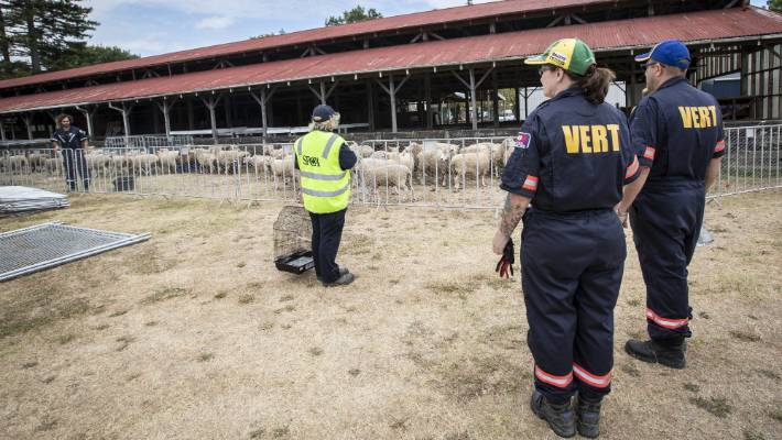 Veterinary Emergency Response Teams (VERT) have been feeding and watering livestock on properties inside the cordoned zones and checking for illness, stress and injury.