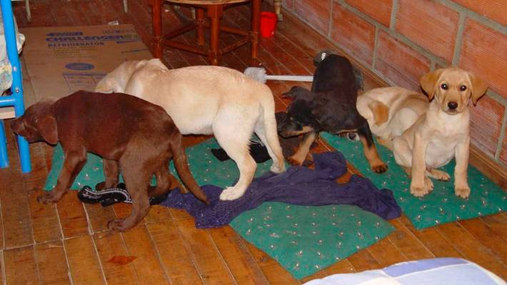 Colombian vet who smuggled heroin to US in puppies sent to prison