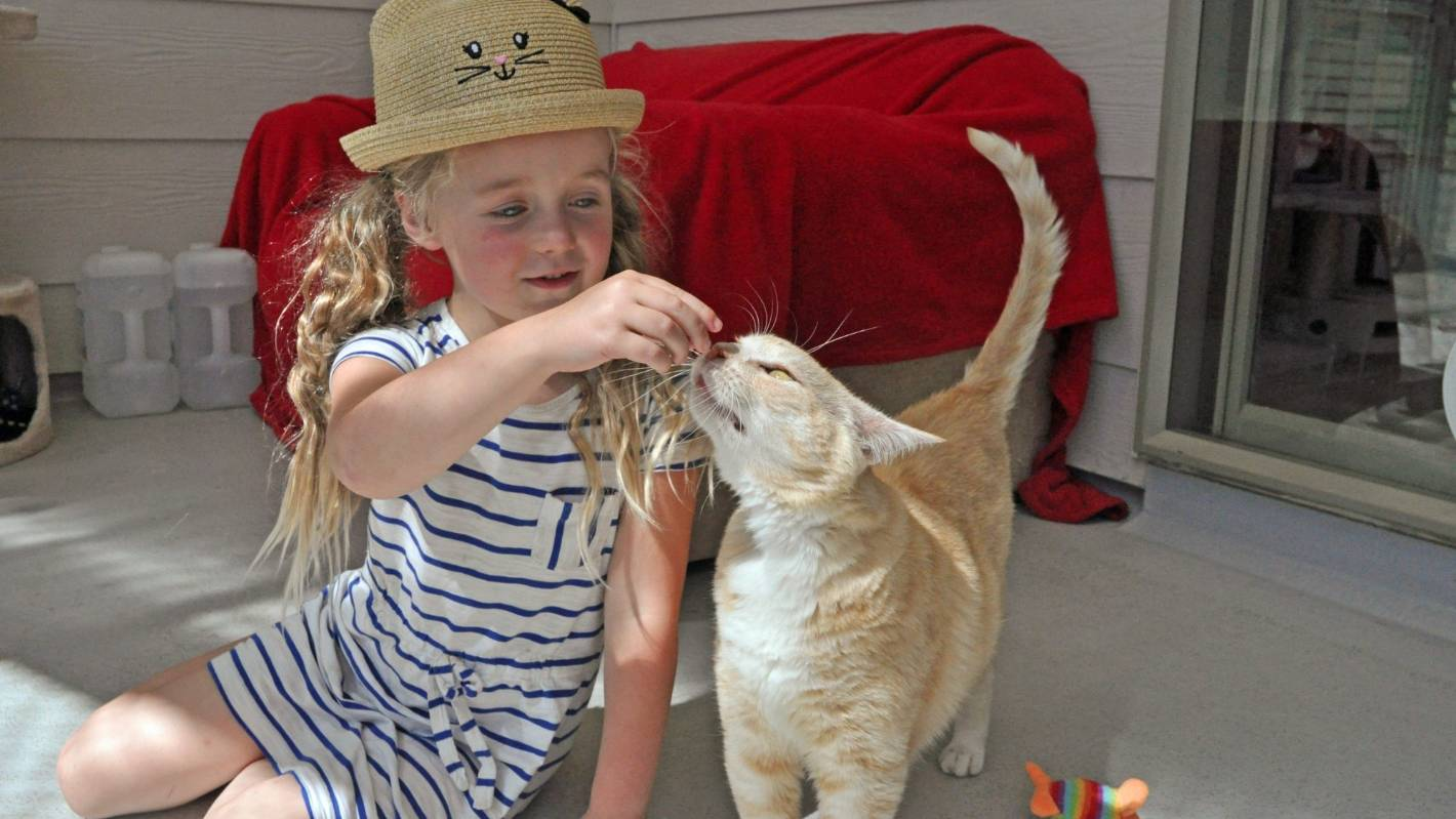 Six Year Old Skips Birthday Gifts Donates Cat Food Instead