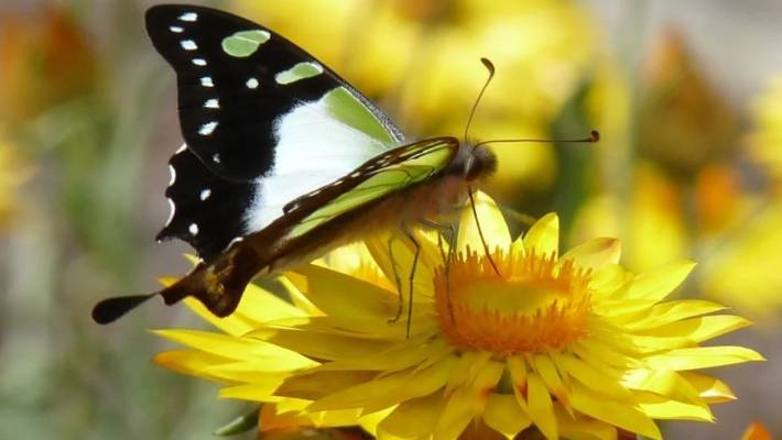 Massive Insect Decline May Have