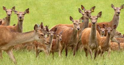 Hind numbers increased 5 per cent in 2018, the first lift in the farmed deer herd for 20 years.