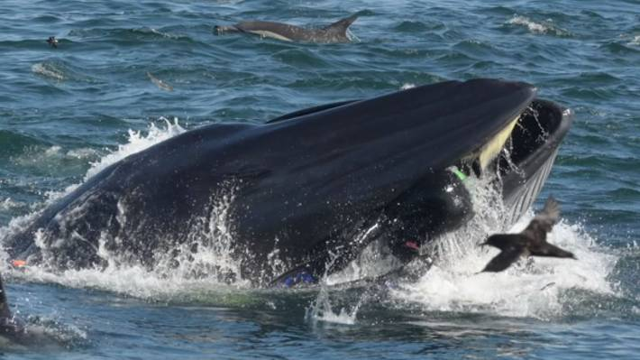 Whale Almost Swallows Diver, Rare Photos Show Near-Death Escape