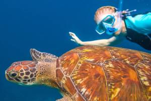 Swimming with a sea turtle in the blue waters of the popular Similan Islands.