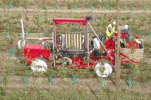 The robot could help curb the issue of annual seasonal labour shortages for the industry in Hawke's Bay, and wider New ...