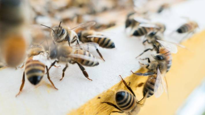 Hundreds of thousands of bees somehow survived the inferno in the Notre Dame cathedral