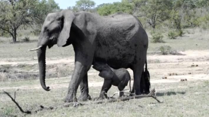 South African Police Retrieve Head Of Rhino Poacher Killed By Elephant
