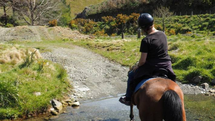 Well-mannered horse offer gentle rides around Cable Bay Adventure Park.