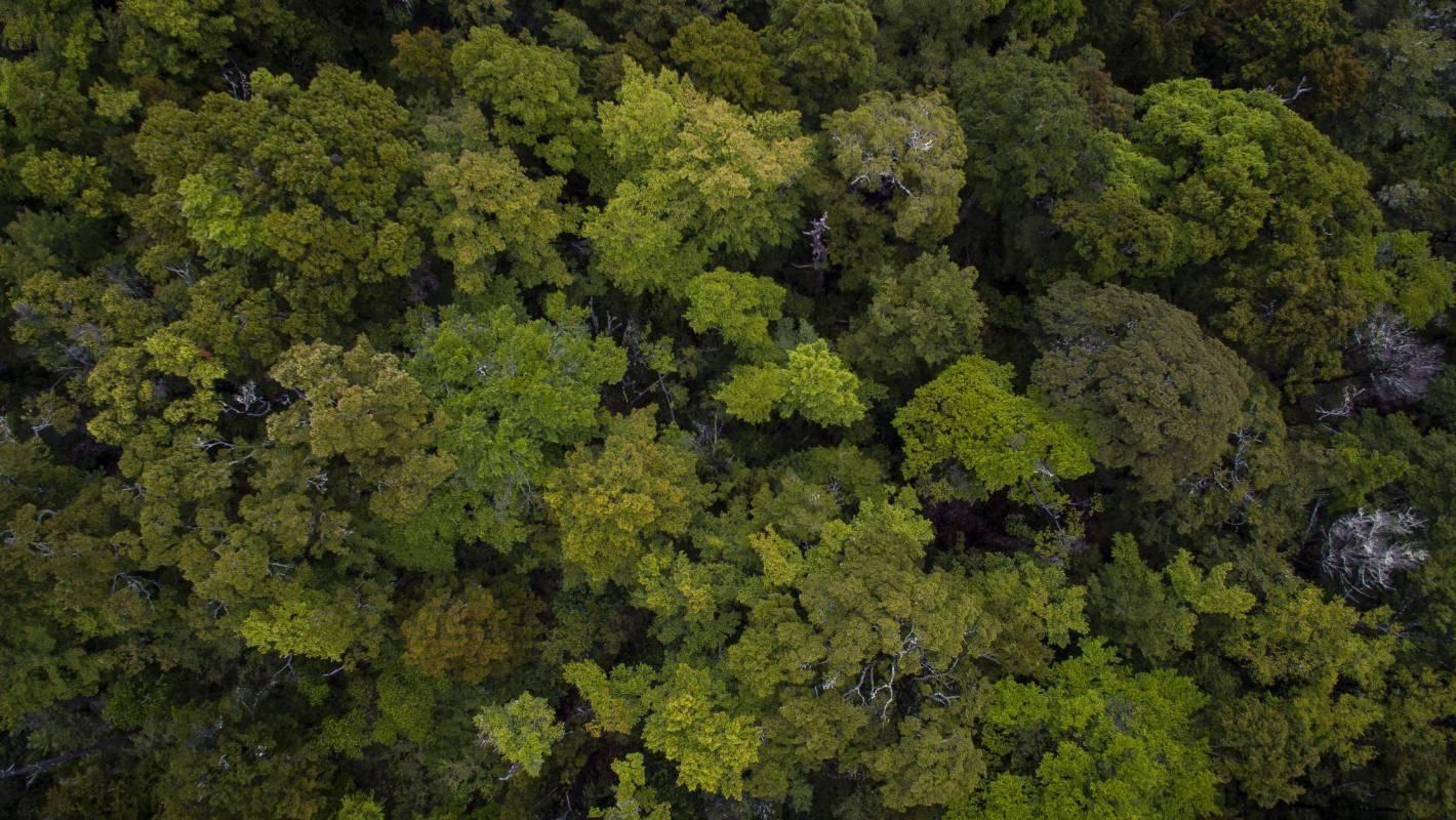 stuff.co.nz - Environment Aotearoa: Government stocktake describes New Zealand environment on the brink