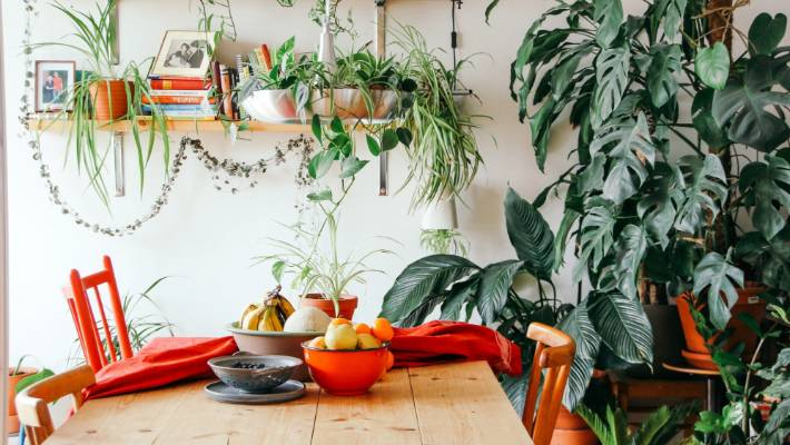 Indoor plants have become a ridiculous status symbol and I'm done with them