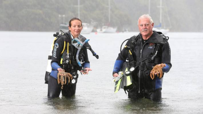 Waikawa Dive Shop manager Kate Trayling, left, and owner Stuart Scaife want to move sea creatures before construction starts.