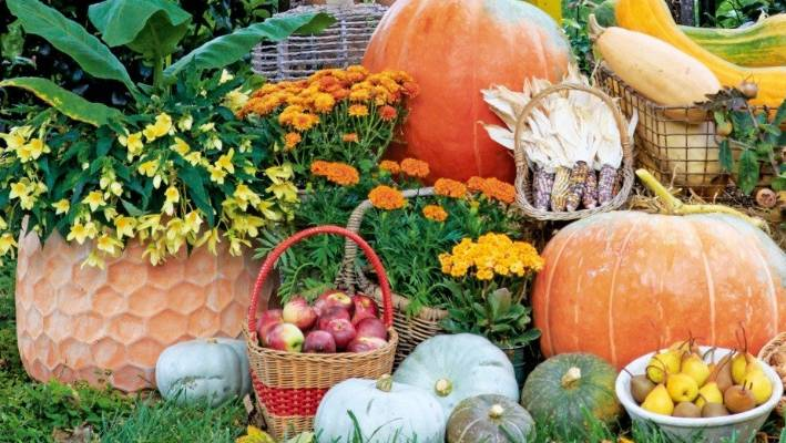 8 Things For Gardeners To Do In Autumn Stuff Co Nz