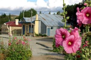 In summer, there are hollyhocks everywhere in Ophir.