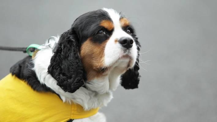 Harper de horende hond is geschud nadat hij werd aangevallen door een andere hond in het centrum van Tokoroa.