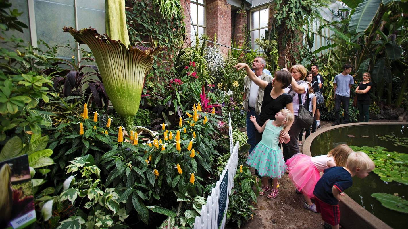 What to do in Auckland over Easter