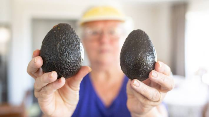 Avocados early to hit the $5 mark