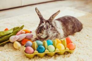 Easter is a great time to try some DIY (and eat some chocolate eggs).