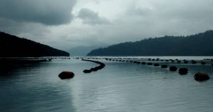 A mussel farm in the Pelorus Sound will be one of the 600 Marlborough Sounds marine farms to get sensors installed.