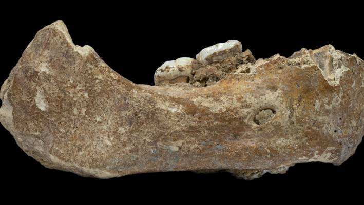Denisovans roamed Tibetan Plateau 160,000 years ago