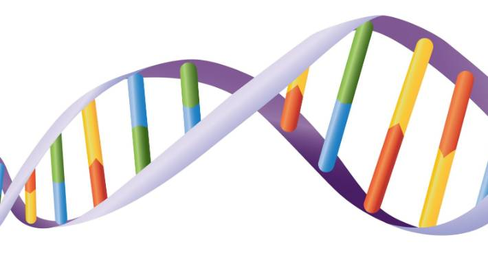 An illustration of DNA helix.