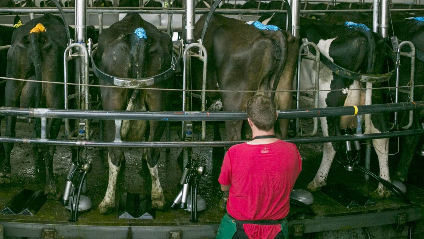 Federated Farmers issues warning to share milkers over contracts