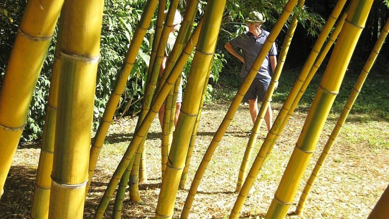Grow Bamboo For Small Gardens Pots Hedges And Just Because It Looks So Good Stuff Co Nz