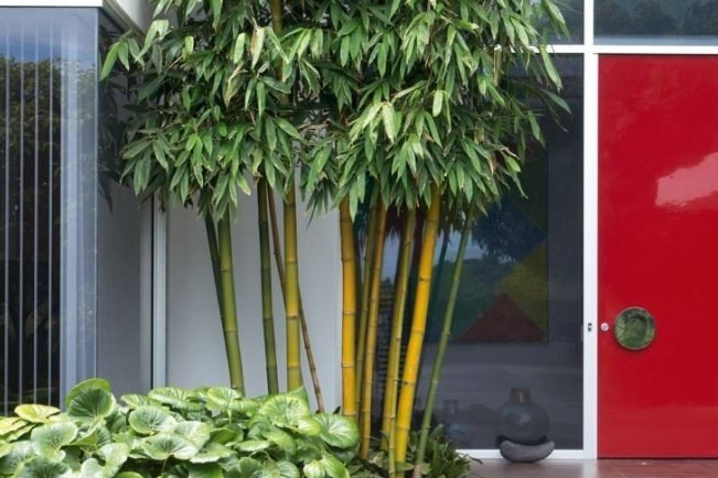Grow Bamboo For Small Gardens Pots Hedges And Just Because It