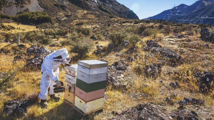 Staff numbers drop in honey company restructure   Stuff co nz