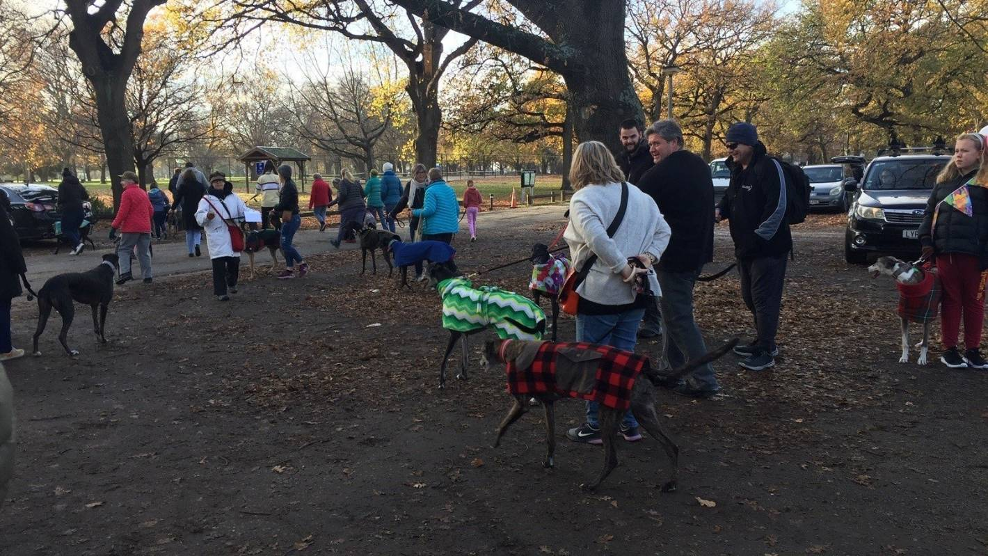 Greyhounds and owners go on great walk to boost awareness of breed