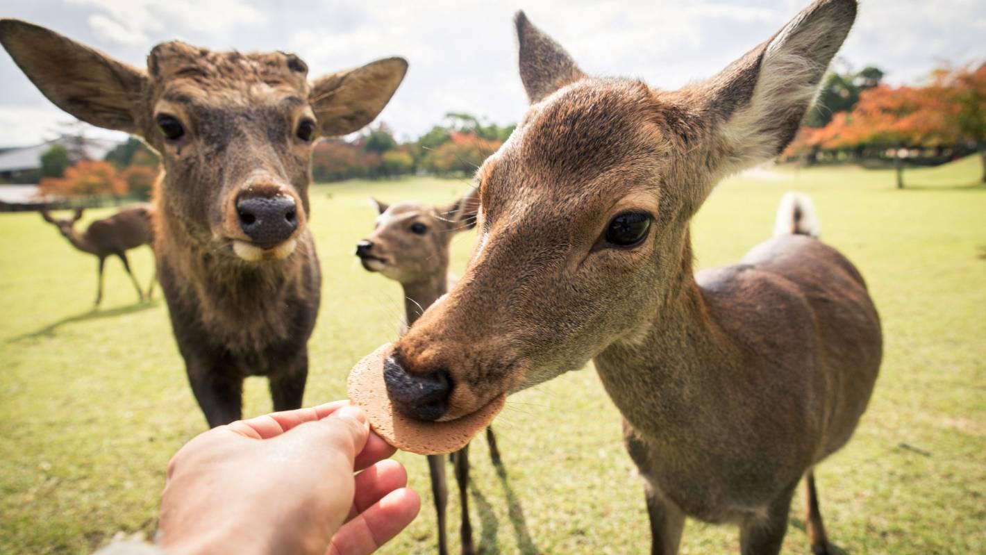 Plastic bags are killing Japan's Nara deer