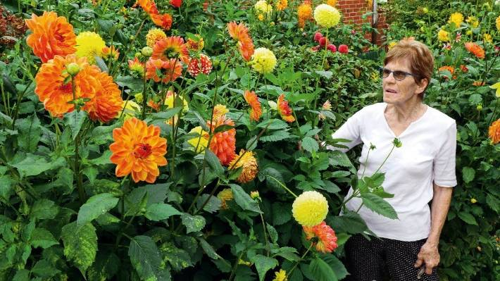 How To Grow Dahlias For Long Lasting Colour And Flower Power