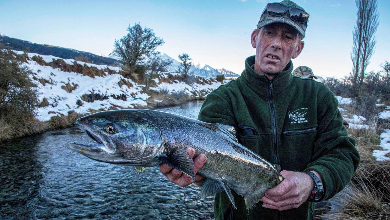 Dirk Barr, a field officer with North Canterbury Fish and Game, holds a salmon at the Manuka Point breeding area in the upper Rakaia River valley.