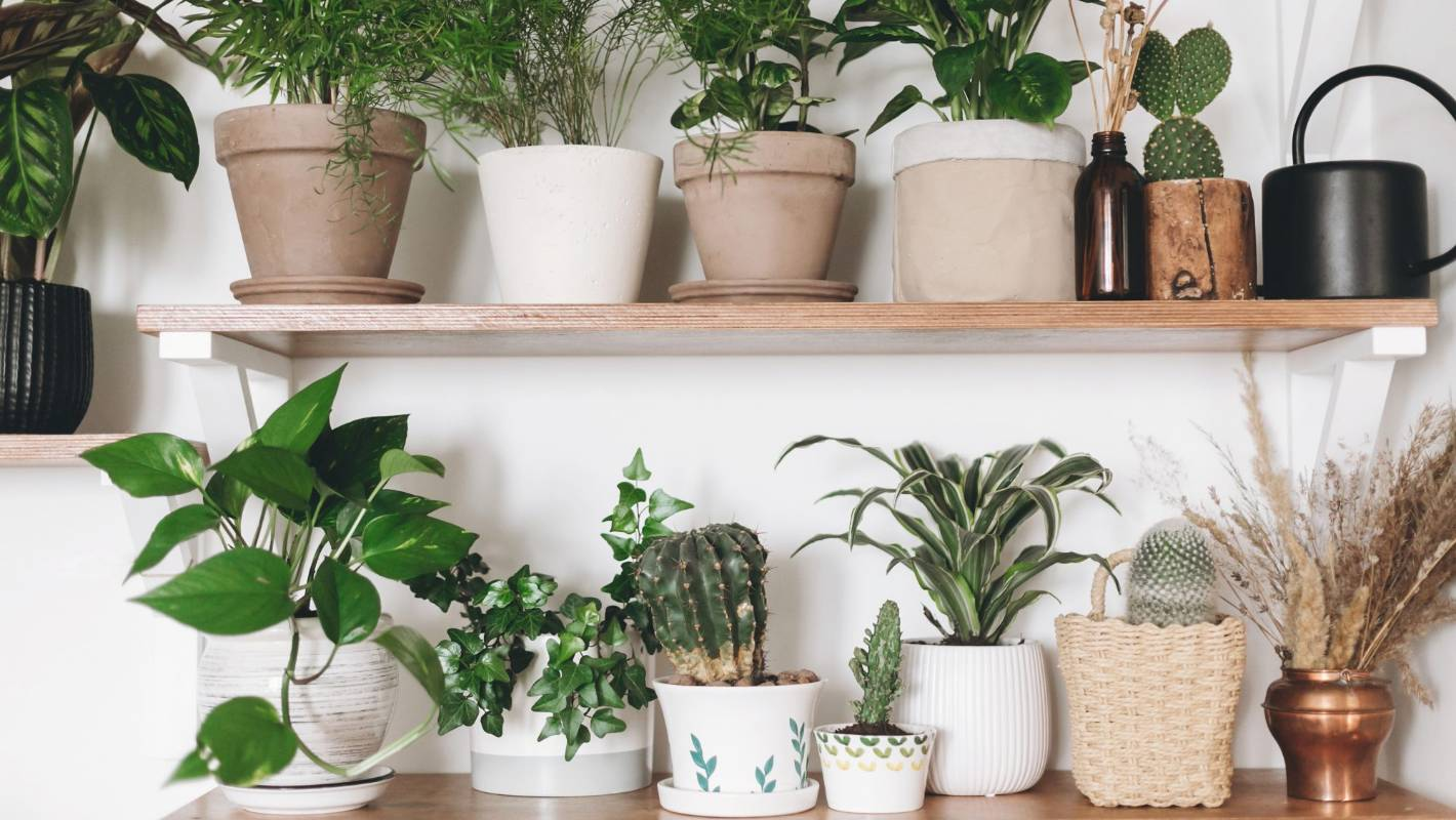 The 10 Best House Plants For Absolute Beginners Stuff Co Nz