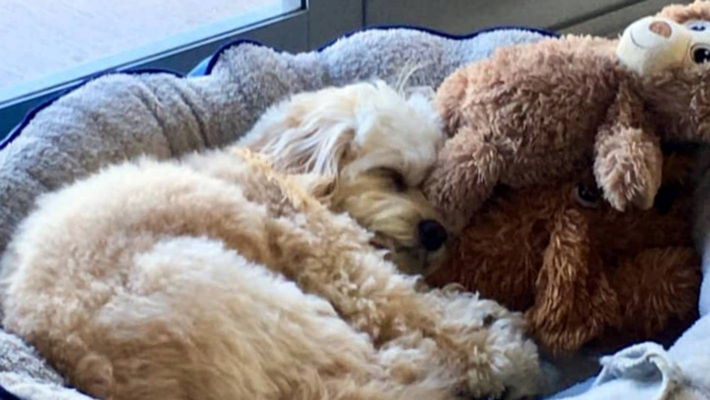 Furry Friday: Too cute to waken   Stuff co nz