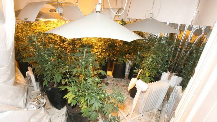 During Operation Crimson, police found a large-scale cannabis growing operation in a rental property.