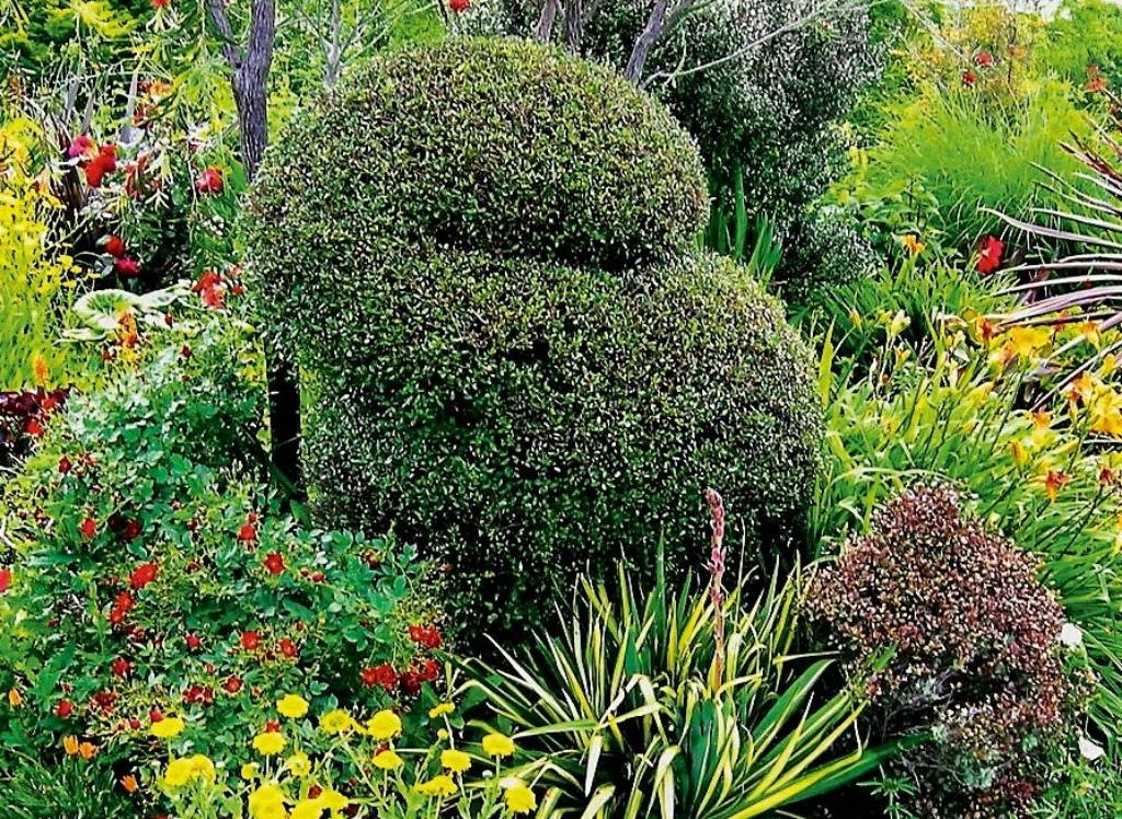 Creative Topiary Ideas Plants And Styles Stuff Co Nz