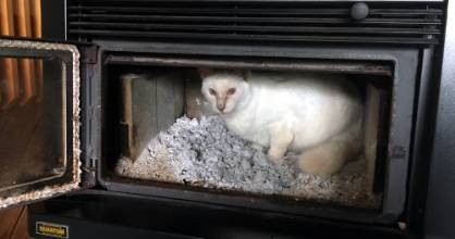In search of a remnant of last night's heat, or possibly testing out the properties of ash as a potential bed, Meower ...
