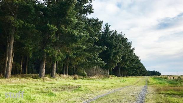Rural life under threat as forestry's canopy grows | Stuff co nz