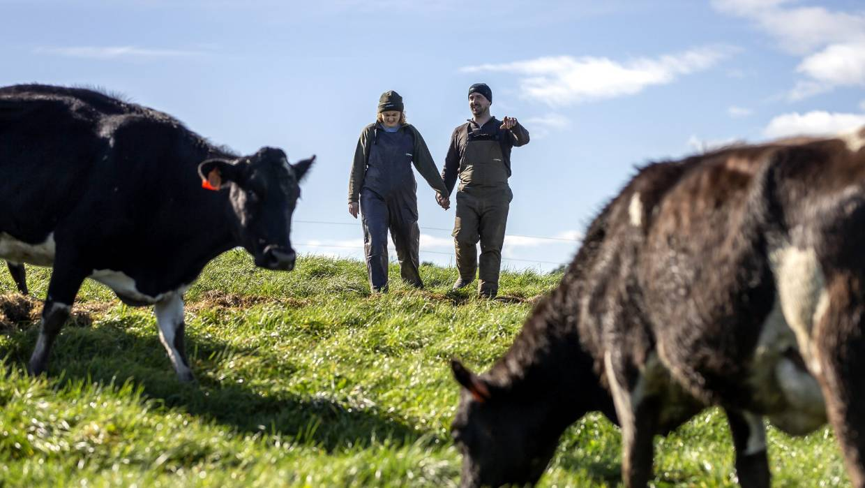 Management :: The Bullvine - The Dairy Information You Want To Know