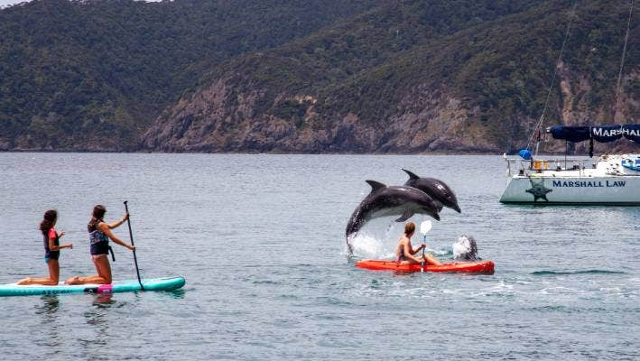 Dolphins are a big draw for visitors to the Bay of Islands.