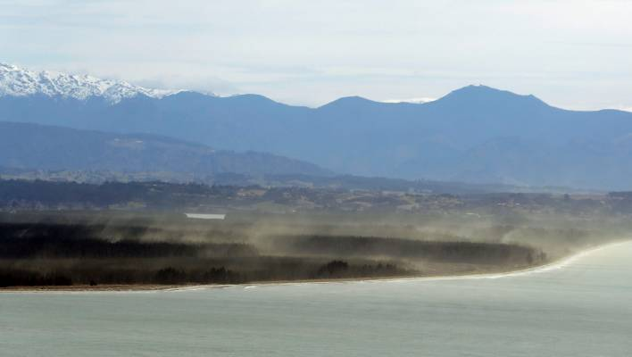 Nelson experiences annual wave of pine pollen | Stuff co nz