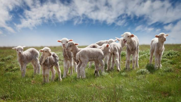 Climate explained: Regenerative farming can help grow food